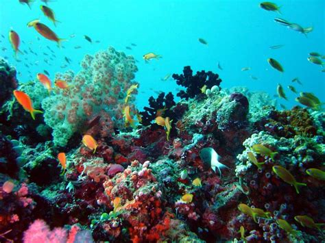 39 Breathtaking Photos of Coral Reefs From Around the