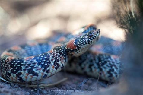Free picture: long, nosed, snake