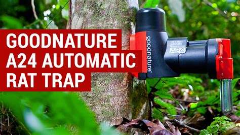 Goodnature A24 Rat Trap Review - Automatic Rat Trap for