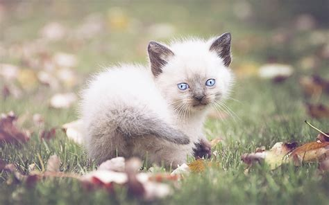 Cute Cat Names - 200 Top Choices For Pretty Kitties!