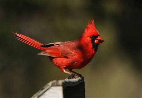 5 places to watch spring bird migration in Upstate NY