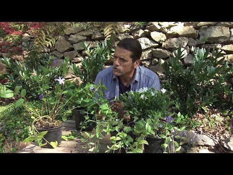 Growing & Caring for Foliage Plants : How to Transplant