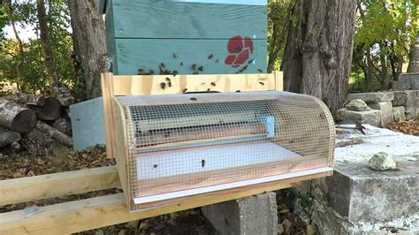 Anti-hornet muzzle on bee hive - YouTube