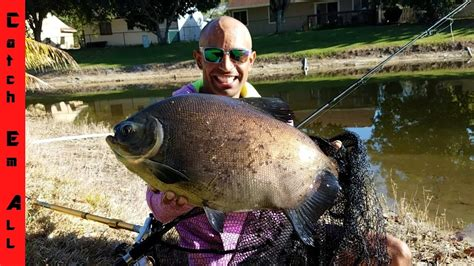 CATCHING MY PET MONSTER PACU! - YouTube