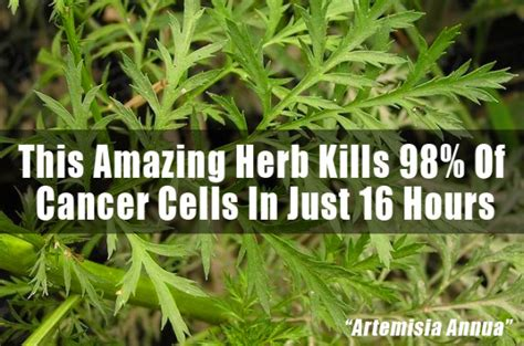 This Little Known Chinese Herb + Iron Kills 98% of Cancer